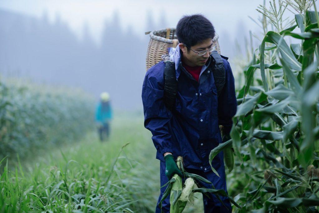 Trainee is walking in the corn field