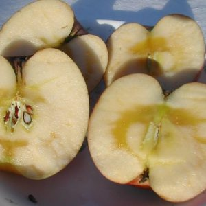 ふじりんごの中身は蜜がたっぷり