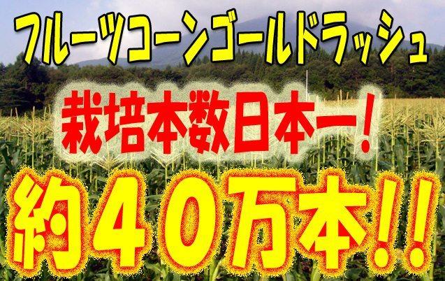 フルーツコーン栽培数日本一