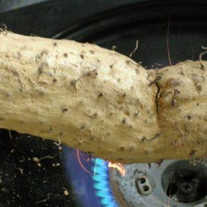 自然薯を炙る
