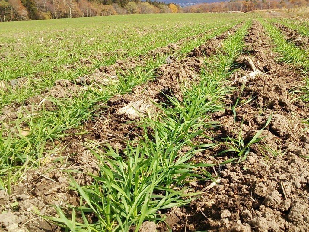ファームかずとの畑の土